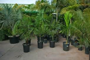 Outside Plants Garden Plants And Palm Trees Images Amp Pictures Becuo