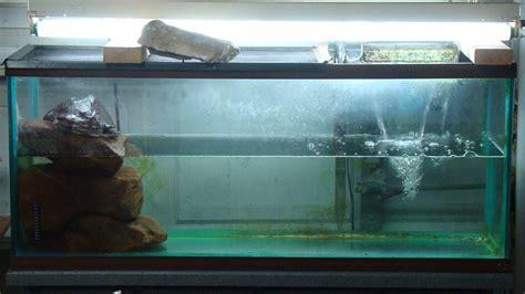 cichlids com 55g red eared slider tank