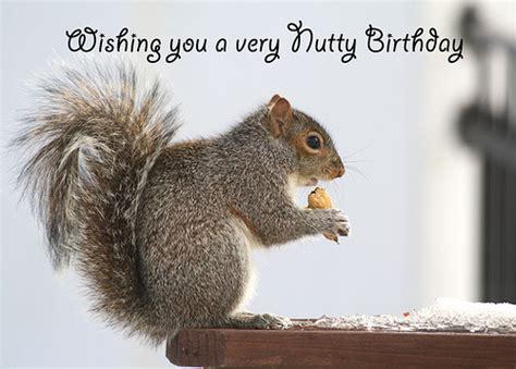 Squirrel Birthday Card Happy Birthday Card Squirrel Wishing You A Very Nutty