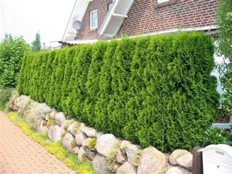 Garten Deko Ruine Kingsborough by 213 Besten Garten Anlegen Bilder Auf Kleine