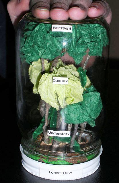 rainforest  op pics amazon rain forest science rainforest classroom rainforest theme