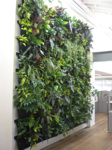 Indoor vertical garden flora grubb contemporary entry