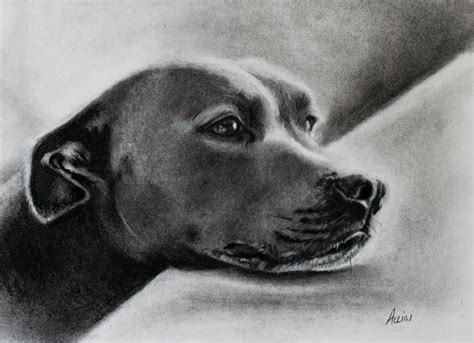 charcoal for dogs drawings archives lac studio