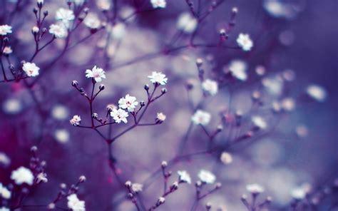 apple wallpaper purple flower download retina nature wallpaper hd resolution 0iy