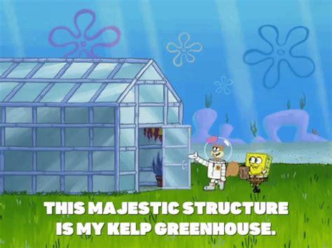 season 8 episode 13 gif by spongebob squarepants find