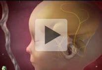 imagenes de como se mueve un bebe en el vientre calendario del bienestar durante el embarazo semana 14
