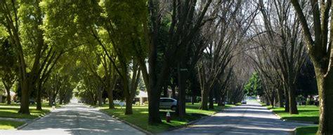 emerald ash borer damaging  communities western