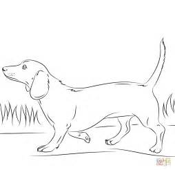 dachshund coloring pages dachshund coloring page free printable coloring pages
