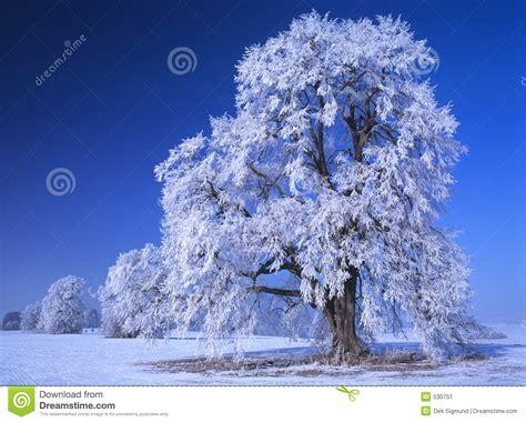 perfect winter day  stock image image  bright festive