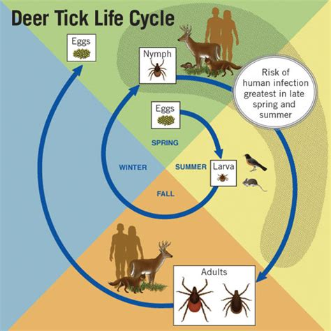 how to get rid of ticks and prevent lyme disease