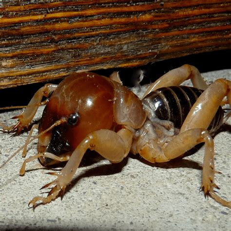 how to get rid of potato bug inside how to get rid of stuff