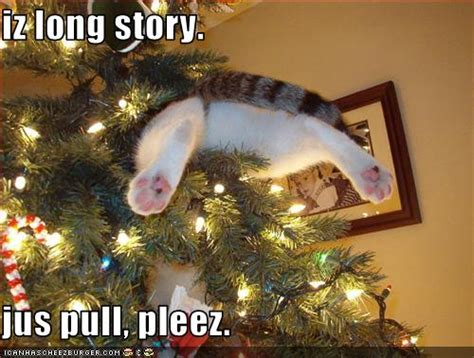 Funny Christmas Cat Memes - funny wallpapers hd wallpapers funny christmas cats