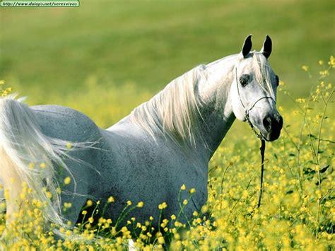 imagenes animales bellos los animales mas bellos del mundo wallpapers taringa