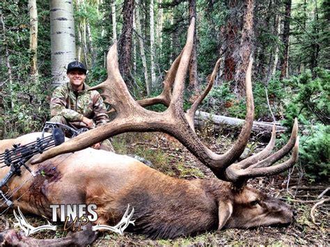huge archery elk causes stir with photo