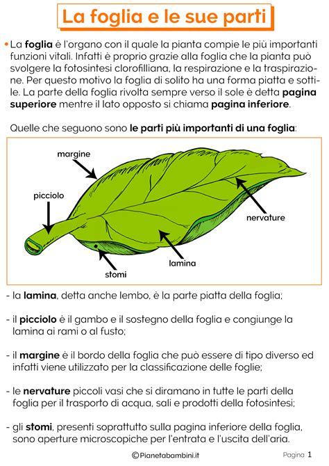 le parti fiore scuola primaria schede didattiche sulle foglie scuola primaria aj03
