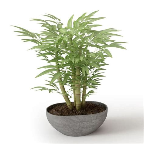 tiny potted plants small potted bamboo plant 3d model cgtrader com