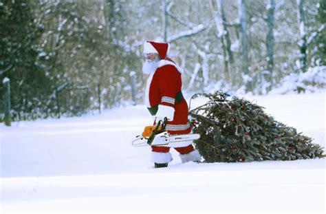 christbaum selber schlagen badisch weihnachtsbaum selber schlagen mit s 228 ge und axt ab in den wald advents shopping weihnachten