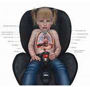 Anatomy Of A 2 Year Old Sitting In Car Seat Note That Rib Cage Is