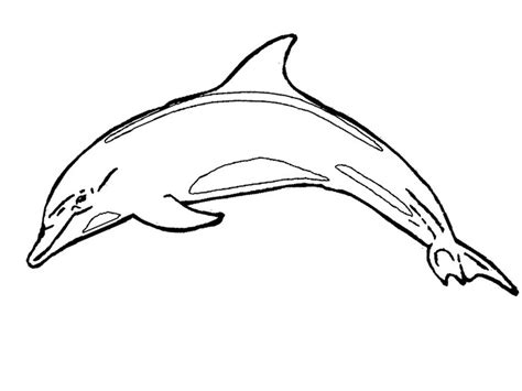 coloring page of bottlenose dolphin coloring page bottlenose dolphin 4k wallpapers