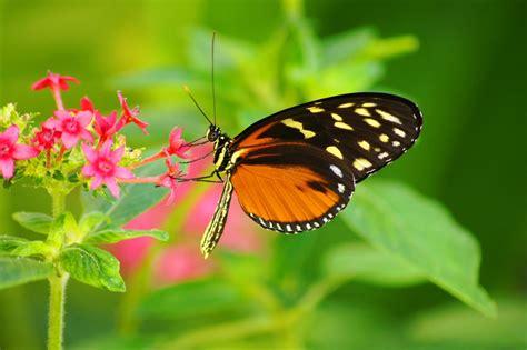 imágenes de mariposa s fotos de mariposas mariposas pinterest