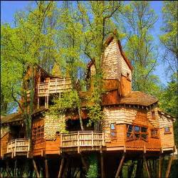 tree houses or houses in trees