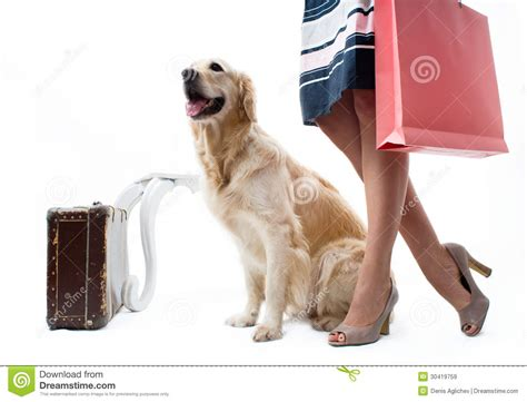 traveling with puppy with royalty free stock images image 30419759