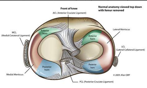 meniscus diagram knee joint anatomy bone and spine