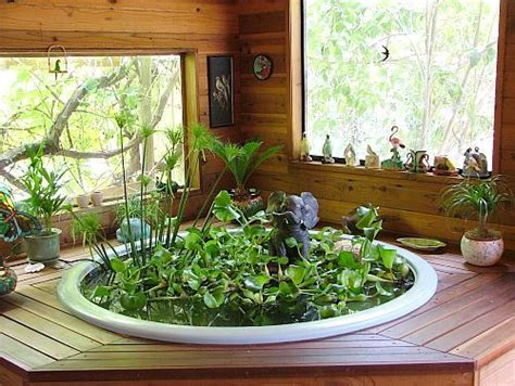 indoor pond indoor fish pond and water hyacinth this would be a