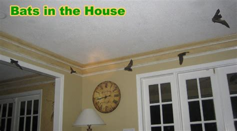 where to put a bat house in your yard bat in my house how do i get a bat out of the house
