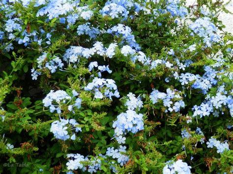 plantas para jardin mediterraneo 53 best plantas para jardin mediterraneo images on