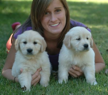 golden retriever puppies for sale in kansas risa s golden retriever puppies of kansas