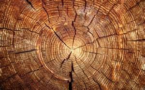 Legno lamellare legno caratteristiche del legno lamellare