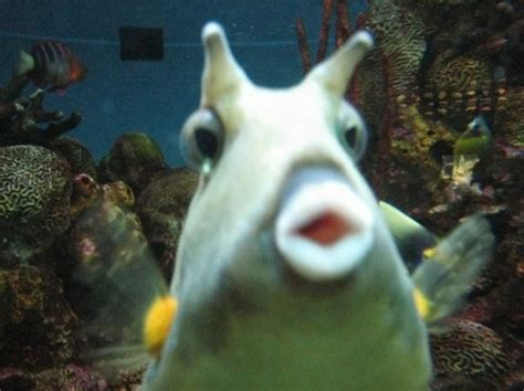 funny fish face jokeitupcom