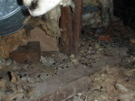 mice in basement crawl space plumbing leaks