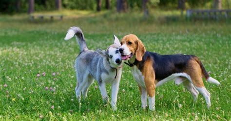 types of cancer in dogs lawn chemicals linked to 2 types of cancer in dogs