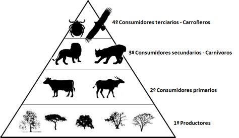 cadena alimenticia pirámide trofica ecodiccionarioelenapascual pir 225 mide tr 243 fica