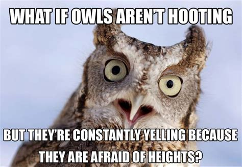 Funny Owl Meme - 12 hilarious owl memes you have to see growld