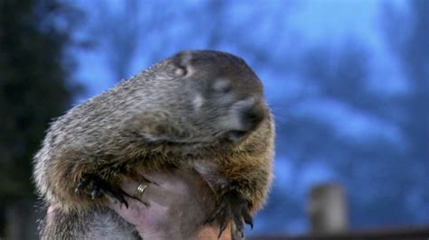 groundhog day lottery groundhog day did phil see his shadow cnn