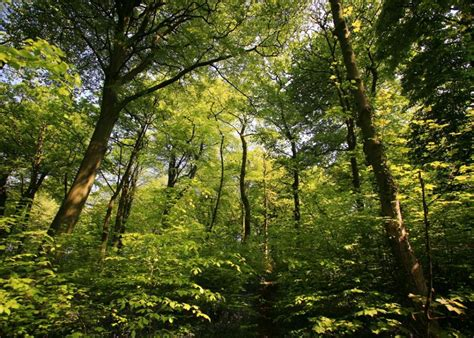 How To Make A Wall Mural own or manage a woodland have your say on future forestry