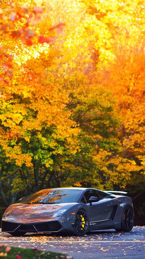 autumn wallpaper hd android lamborghini in autumn forest best hd wallpapers for