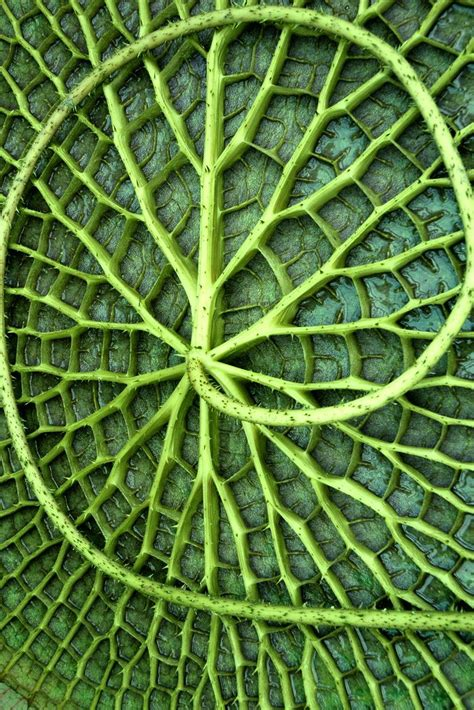 pattern formation in plants and animals best 25 patterns in nature ideas on pinterest