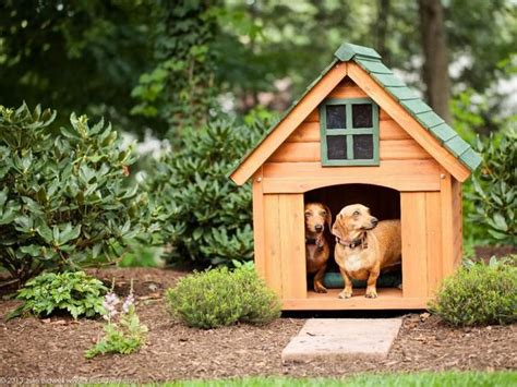 dog outside house dog house outdoor pet house pinterest