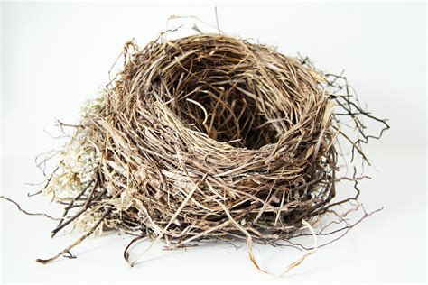 The Birds Nest birds nest search engine at search