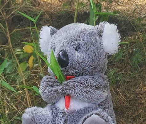 Jual Berat Boneka by Jual Boneka Koala Murah Harga Boneka Koala