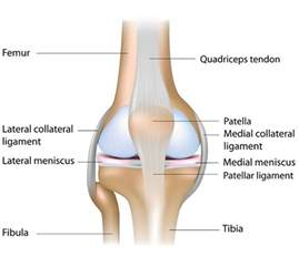 Interior Knee Ligament Learn Yoga Anatomy 5 Yoga Poses To Protect The Knee Joint