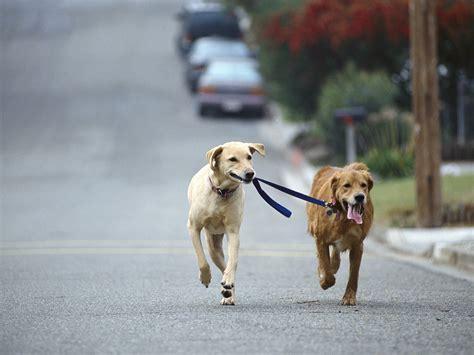 puppy walking walking and walking