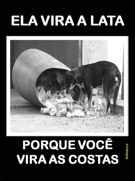 JORNAL VOCÊ E SEU PET: Cuidar e alimentar animais de rua é