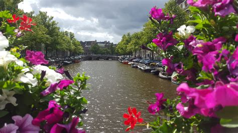 amsterdamse bloem plog dagje naar amsterdam proefparade all lovely things