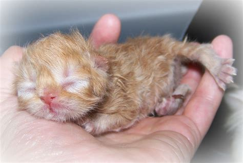 newborn kittens related keywords suggestions for newborn kittens eye