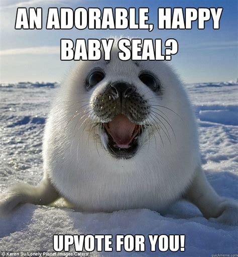 Baby Seal Meme - baby harbor seal memes